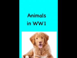 animals book creator